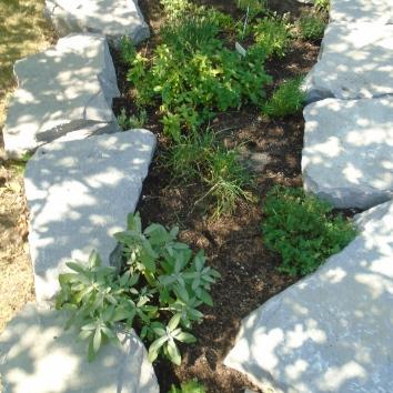 Sage, Marjoram, Thyme, Chives, Rosemary, l.avender, Basil, Oregano, Parsley, Mint, Dill and Lemon Balm