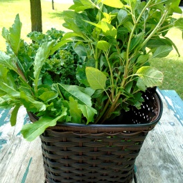 Arugula, Callaloo and Kale.